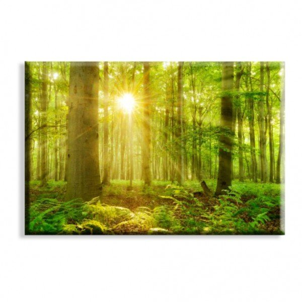 Tela Floresta Verde