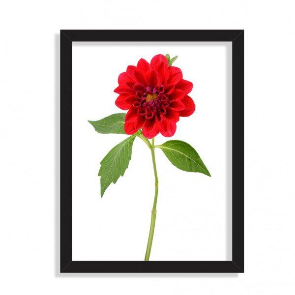 Quadro Decorativo Peônia Flor Vermelha Preto
