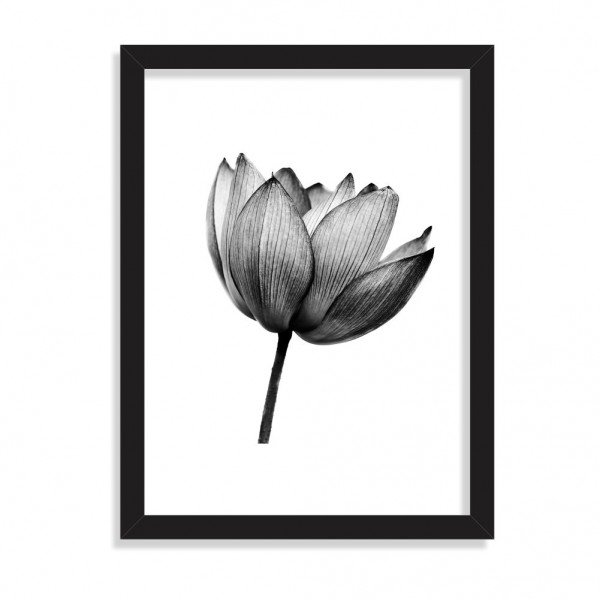 Quadro Decorativo Flor de Lotus Black and White Preto