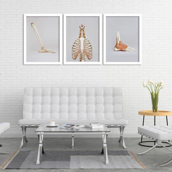Kit 3 Quadros Decorativos Partes Anatômicas Branco