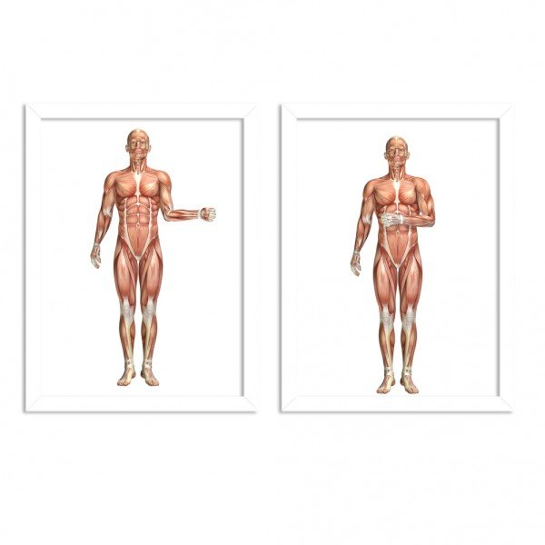 Kit 2 Quadros Decorativos Anatomia Corpo Humano Manguitos Branco