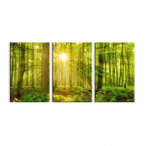 Kit 3 Telas Canvas Decorativas Floresta Verde Raio de Sol