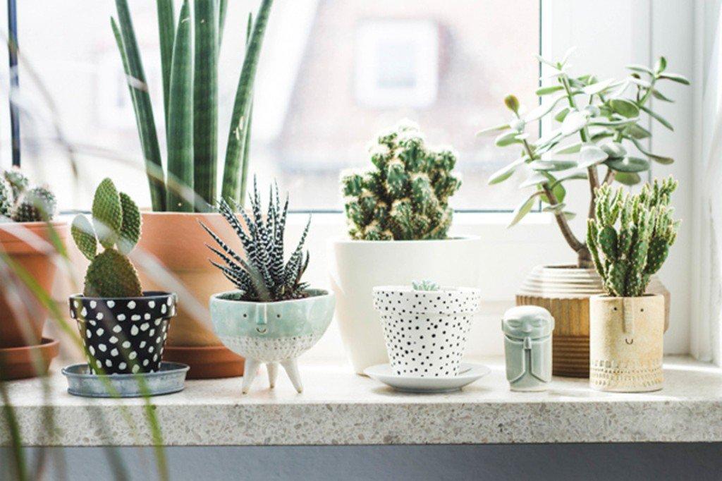 plantas na decor textura prego e martelo