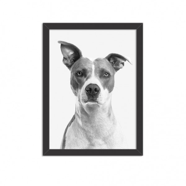 Quadro Decorativo Animal Meu Melhor Amigo Cachorro Preto e Branco
