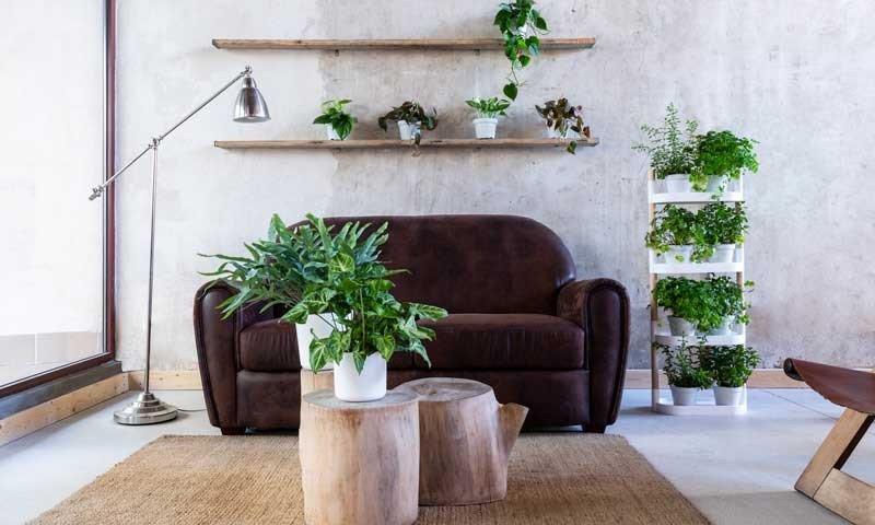 decorar plantas coquetel prego e martelo