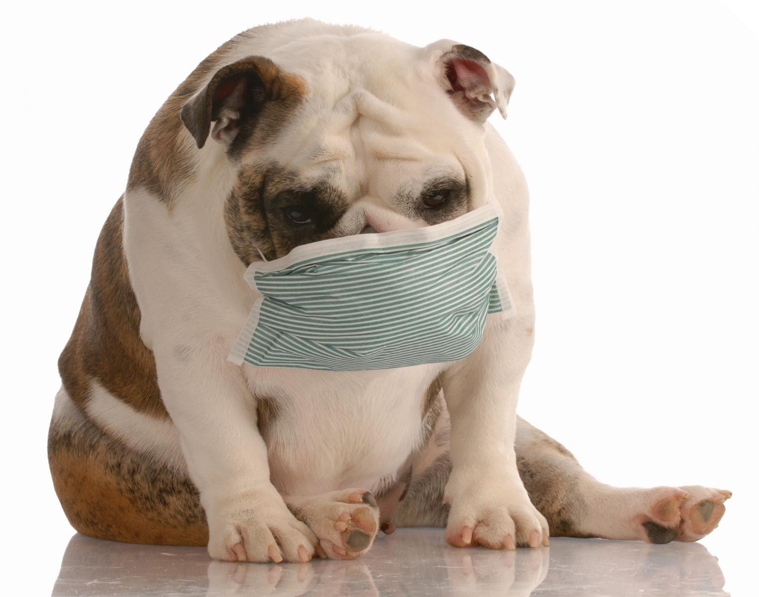 cachorro mascara coronavirus prego e martelo