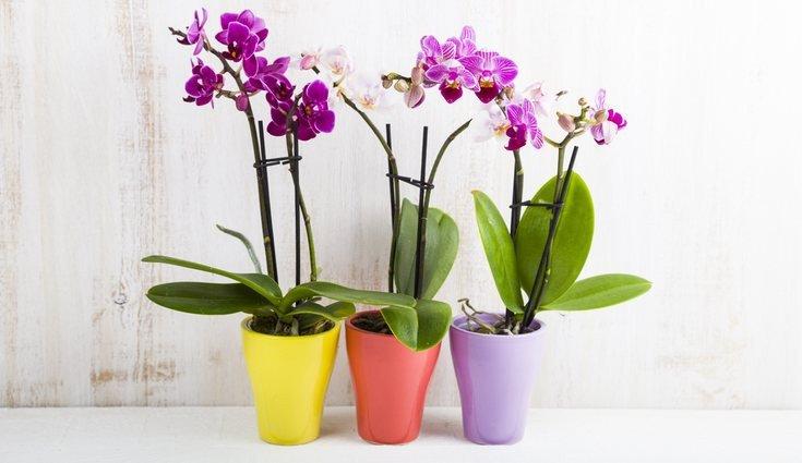 orquidea planta no quarto prego e martelo