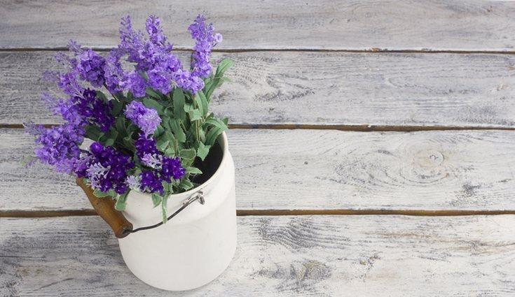 lavanda plantas no quarto prego e martelo