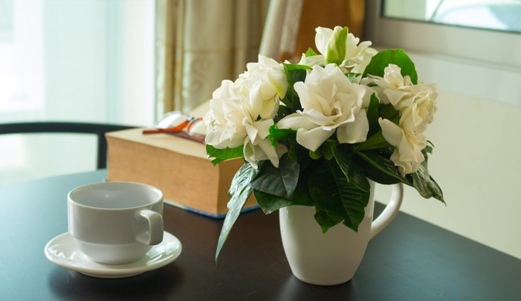 gardenia plantas no quarto prego e martelo