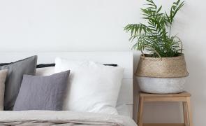 plantas para quarto CAPA