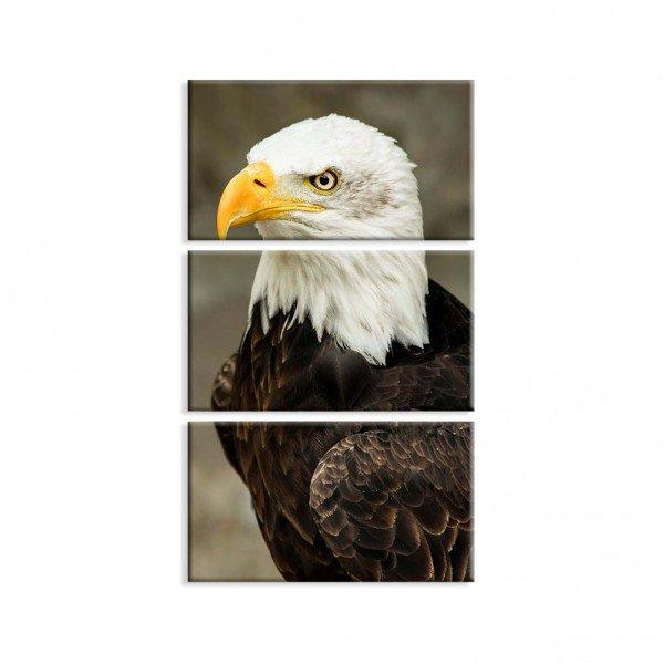 sem fundo aguia