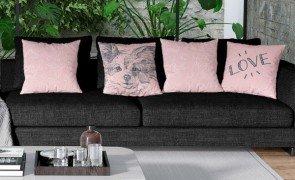 sofa pet