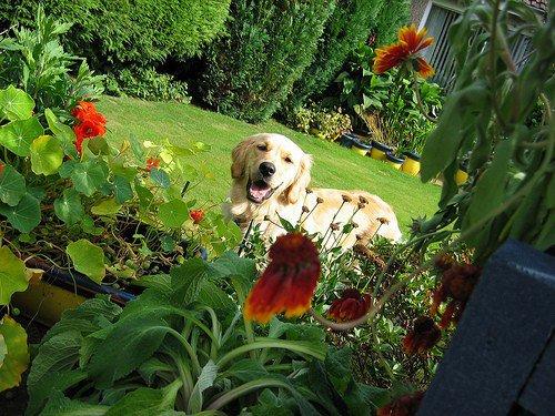 cachorro no jardim prego e martelo