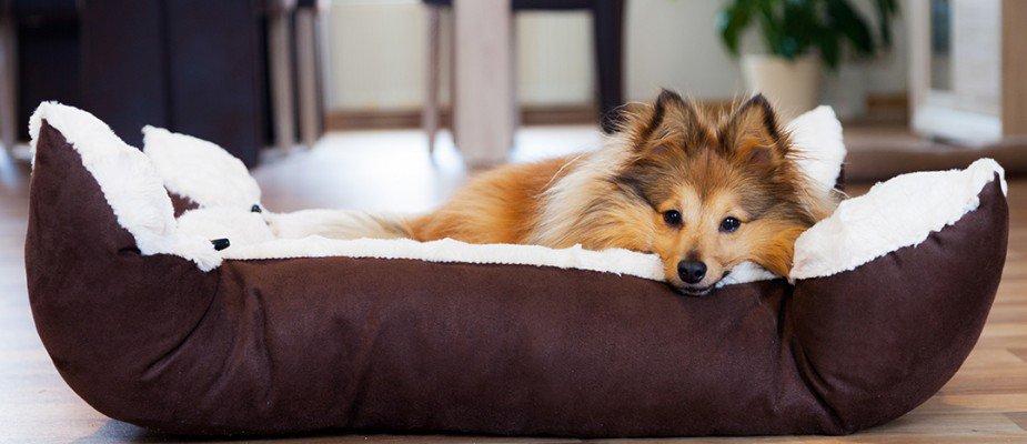 Ideias práticas para decorar a casa preparada para seu pet.
