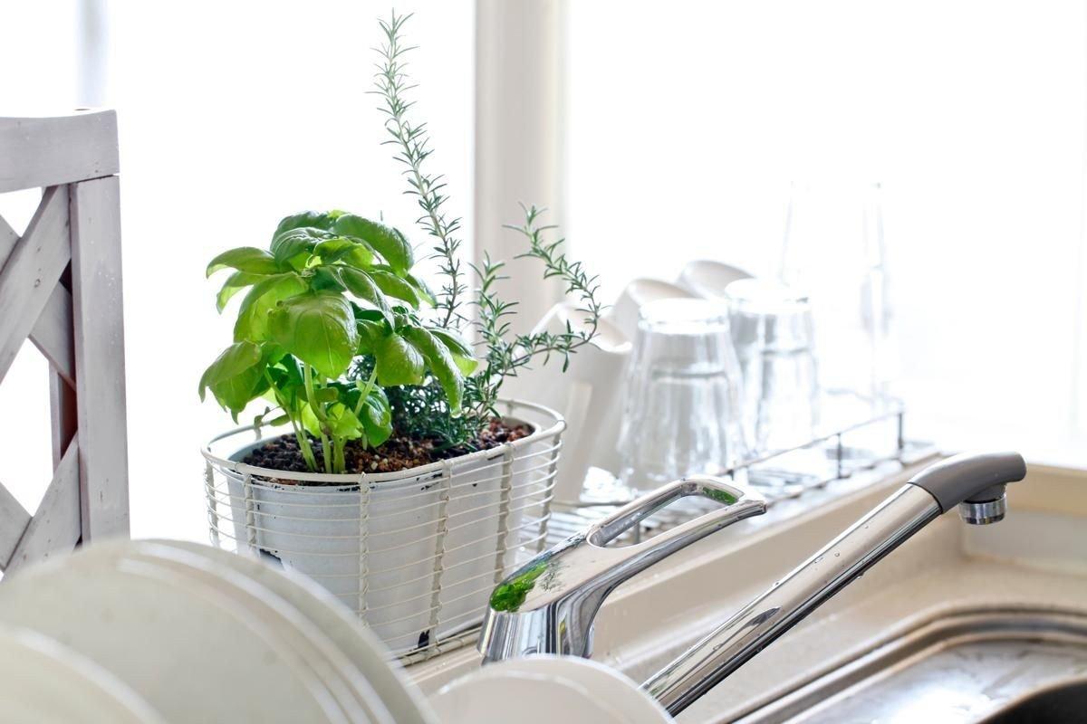 plantas feng shui prego e martelo