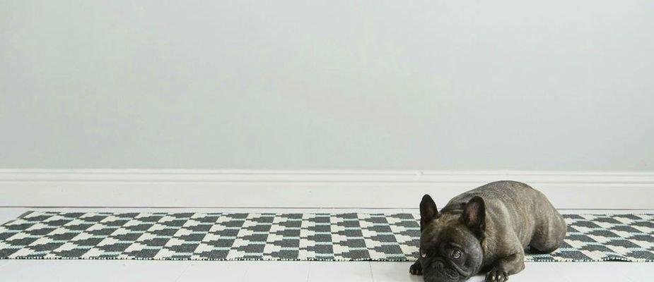 Bicho em casa: dá pra ter tapetes e animais de estimacão?