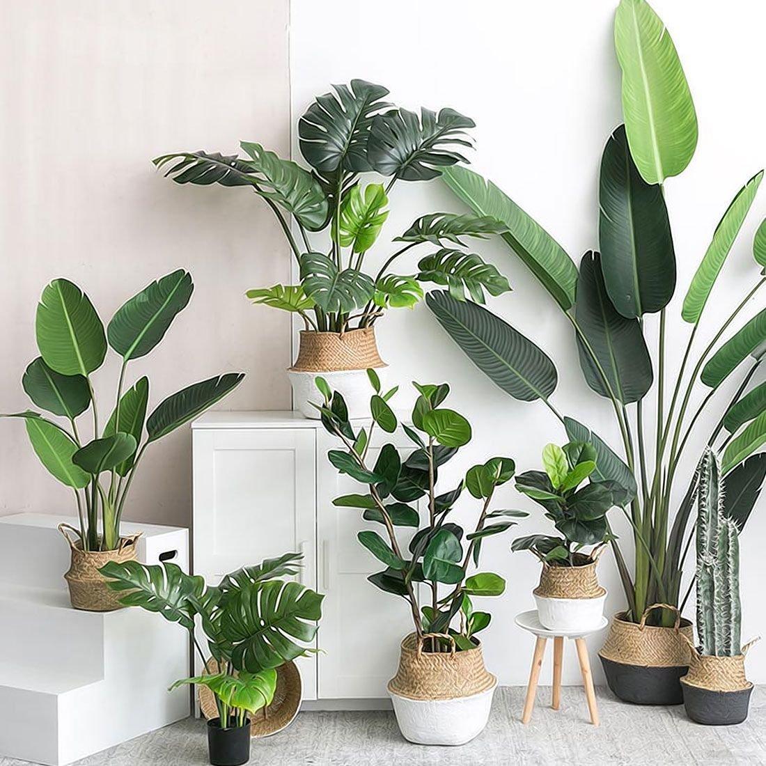 plantas felicidade decor prego e martelo