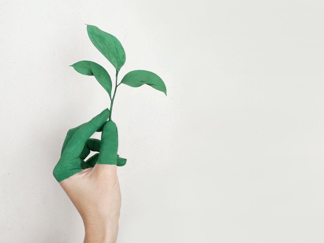 eco friendly prego e martelo