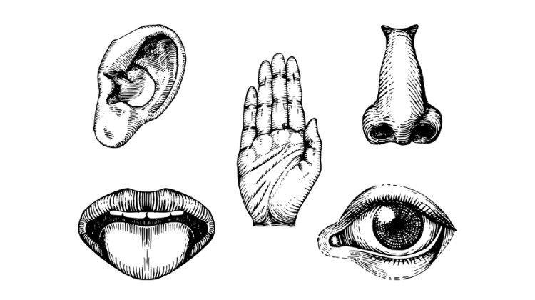5 sentidos prego e martelo